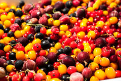 Buckthorn berries cranberries currants gooseberries Royalty Free Stock Photo
