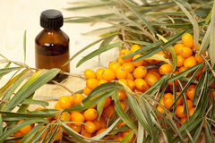 Buckthorn. The berries of sea buckthorn and sea buckthorn oil in a bottle Royalty Free Stock Image