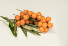 Buckthorn. Berry on a teig  over white Royalty Free Stock Image