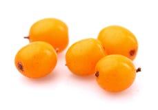 Buckthorn berry Stock Image