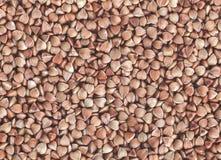 Buckweat grain macro background. A high resolution macro shot of dry buchweat grain. Healthy food background royalty free stock image