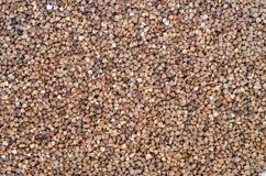 Buckweat groats. Food background of bucweat groats royalty free stock images