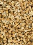 Buckweat kasha Royalty Free Stock Image