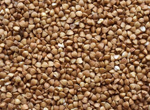 Buckwheat. Stock Image