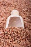Buckwheat Stock Photography