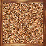Buckwheat Stock Image