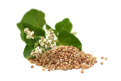 Buckwheat. Grains and green leaves on white Royalty Free Stock Photography