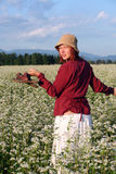 Buckwheat. Field in the middle of Slovenia Royalty Free Stock Photos