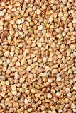 Buckwheat. The dried up grains of buckwheat royalty free stock images