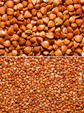Buckwheat Stock Photo