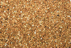 Buckwheat background. Background from croup of  buckwheat Stock Image