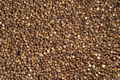 Buckwheat Background Royalty Free Stock Photo