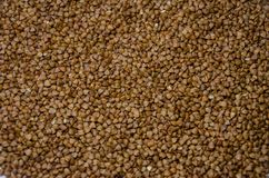 Buckwheat for the background royalty free stock photo