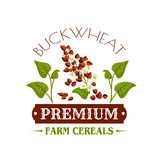 Buckwheat cereal vector poster or emblem Stock Image