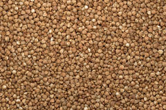 Buckwheat close up. An equal layer Royalty Free Stock Photography