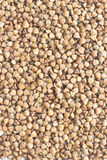 Buckwheat close up. Top view Royalty Free Stock Photo