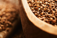 Buckwheat close up Stock Image
