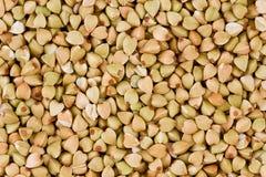Buckwheat (Fagopyrum esculentum) Stock Photography