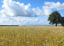 Lithuanian summer landscape Stock Image