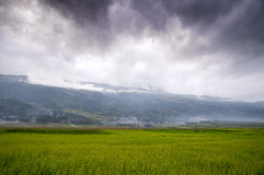 Buckwheat field in dark clouds Stock Images