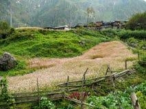 Buckwheat fields and Thamchok village - Nepal Royalty Free Stock Photos