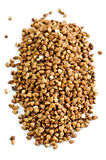 Buckwheat grain Stock Photo