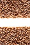 Buckwheat grain Royalty Free Stock Image