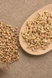 Buckwheat grain. Beans sprouts. Natural background. Wooden spoon Royalty Free Stock Photo