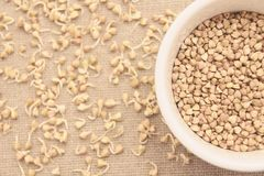 Buckwheat grain. Neutral background. Sprouts. White plate. Buckwheat grain. Neutral light brown background. Small sprouts. White plate Stock Photo