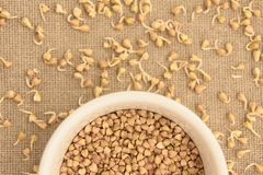 Buckwheat grain. Sprouts. White plate. Neutral background Royalty Free Stock Photography