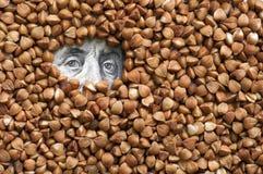 Buckwheat grains on bank note Stock Photo