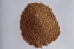 Buckwheat grains stock images