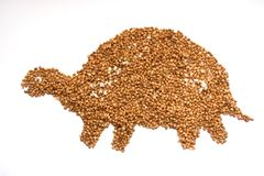 Buckwheat grains in the form of a turtle silhouette. On a white background royalty free stock photography
