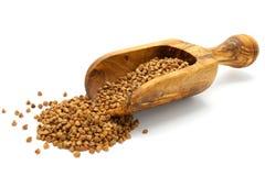 Buckwheat grains in wooden scoop Stock Photography