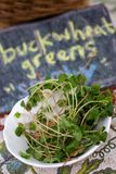 Buckwheat Greens in White Bowl with Chalk Sign Stock Image
