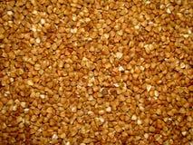 Buckwheat groats. Diet, grain Greceanii fried grits Stock Image