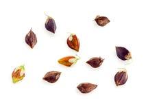 Buckwheat groats. Seeds isolated on white Stock Photos