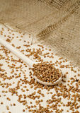 Buckwheat groats. In wooden spoon on the table Royalty Free Stock Photography