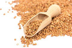 Buckwheat Stock Image