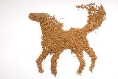 Buckwheat horse Royalty Free Stock Images