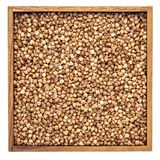 Buckwheat kasha in wooden box Royalty Free Stock Photography