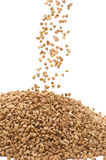 Buckwheat macro Royalty Free Stock Photos