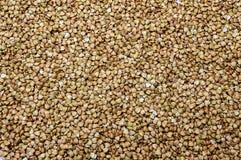 Buckwheat natural organic vegan vitamins green texture royalty free stock photos