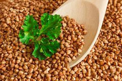 Buckwheat is on the plate with  wooden spoon Royalty Free Stock Image