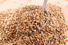 Buckwheat porridge. Buckwheat in a metal spoon Stock Image