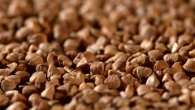 Buckwheat, rotation stock video