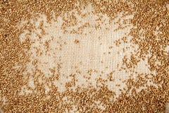 Buckwheat on sack cloth Royalty Free Stock Image