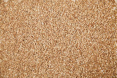 Buckwheat on sack cloth Royalty Free Stock Photography
