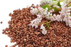 Buckwheat seed and flowers Royalty Free Stock Photography