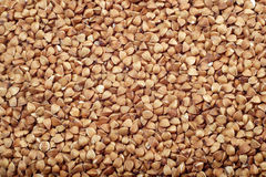 Buckwheat seeds Stock Images